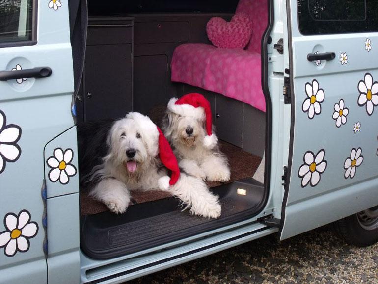 Christmas dogs in Daisy van