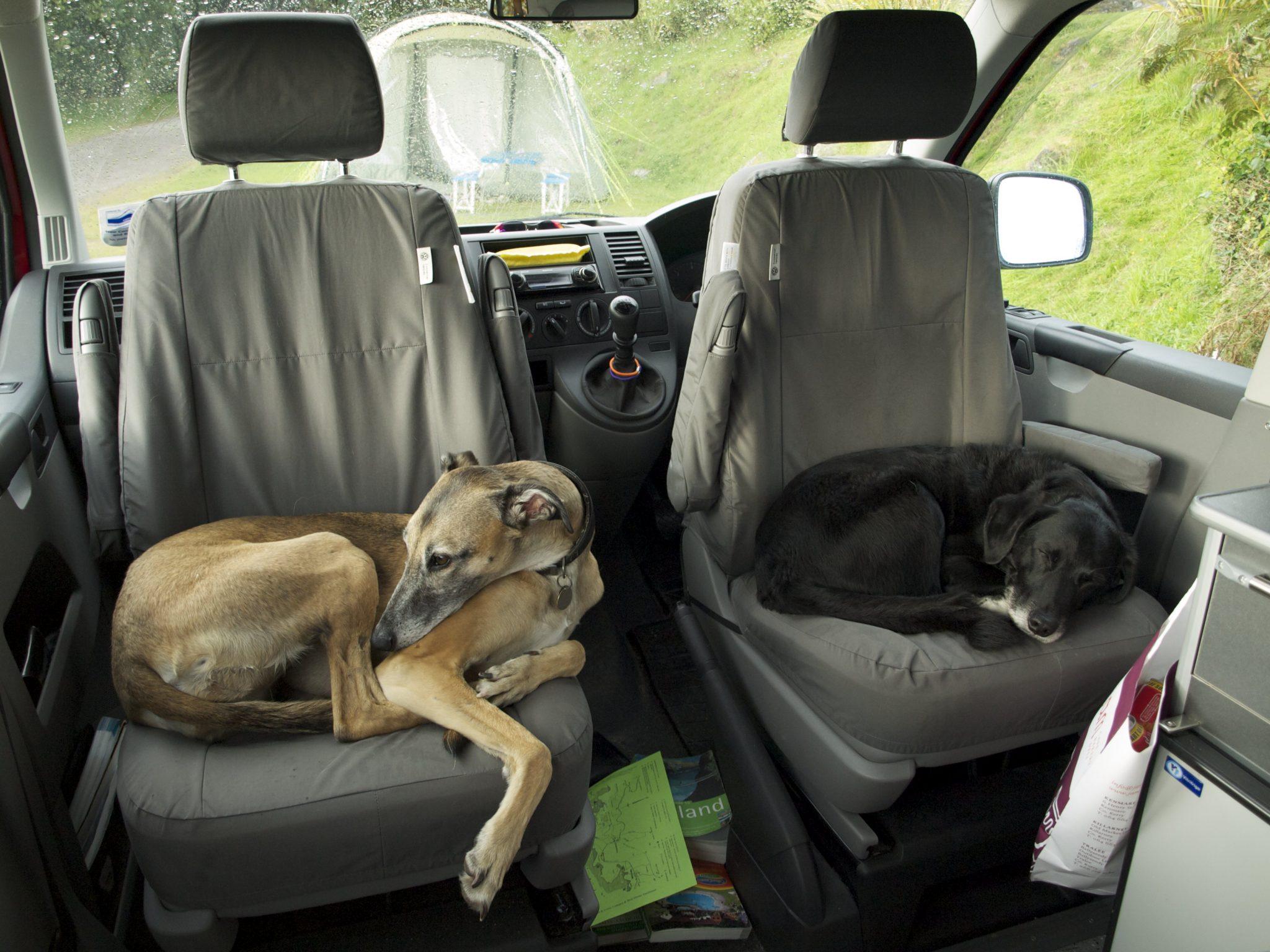 dogs campervan