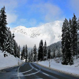 the-cold-season