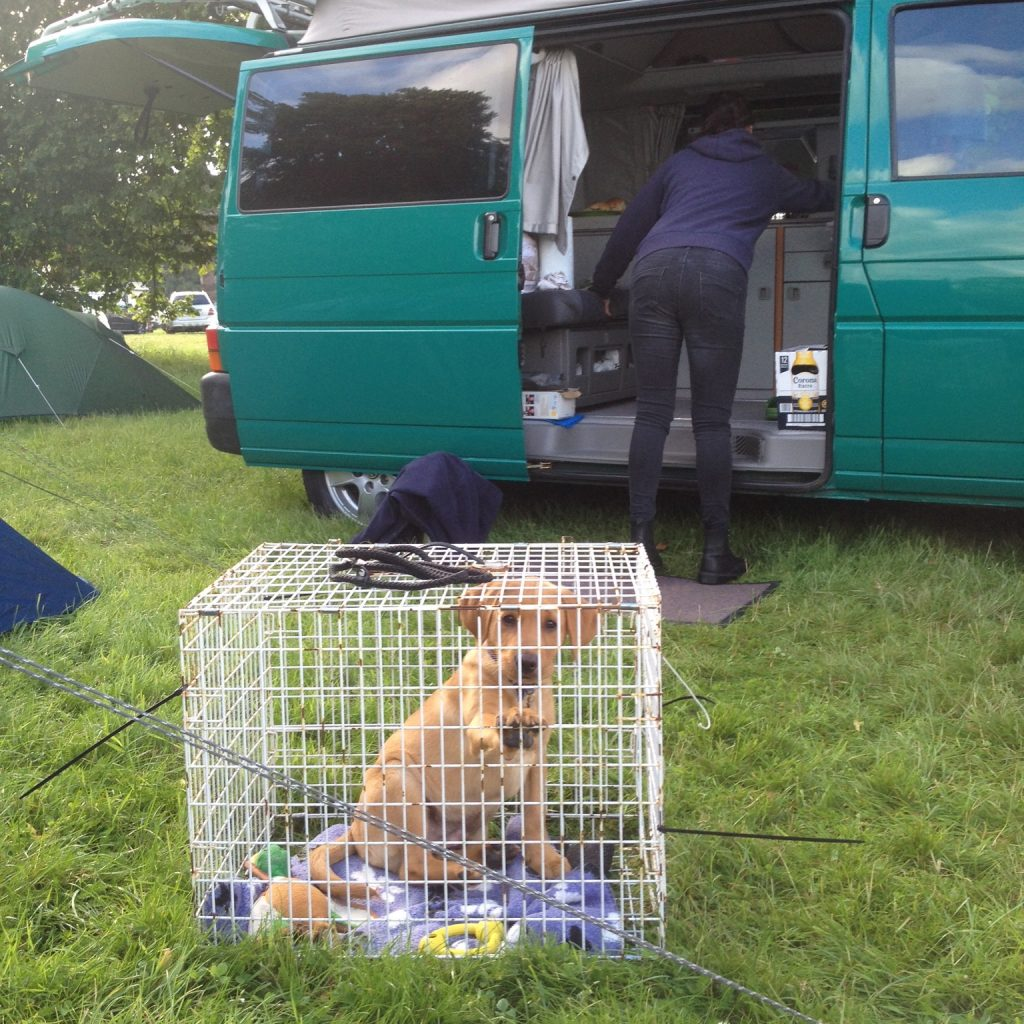 dog in travelling cage