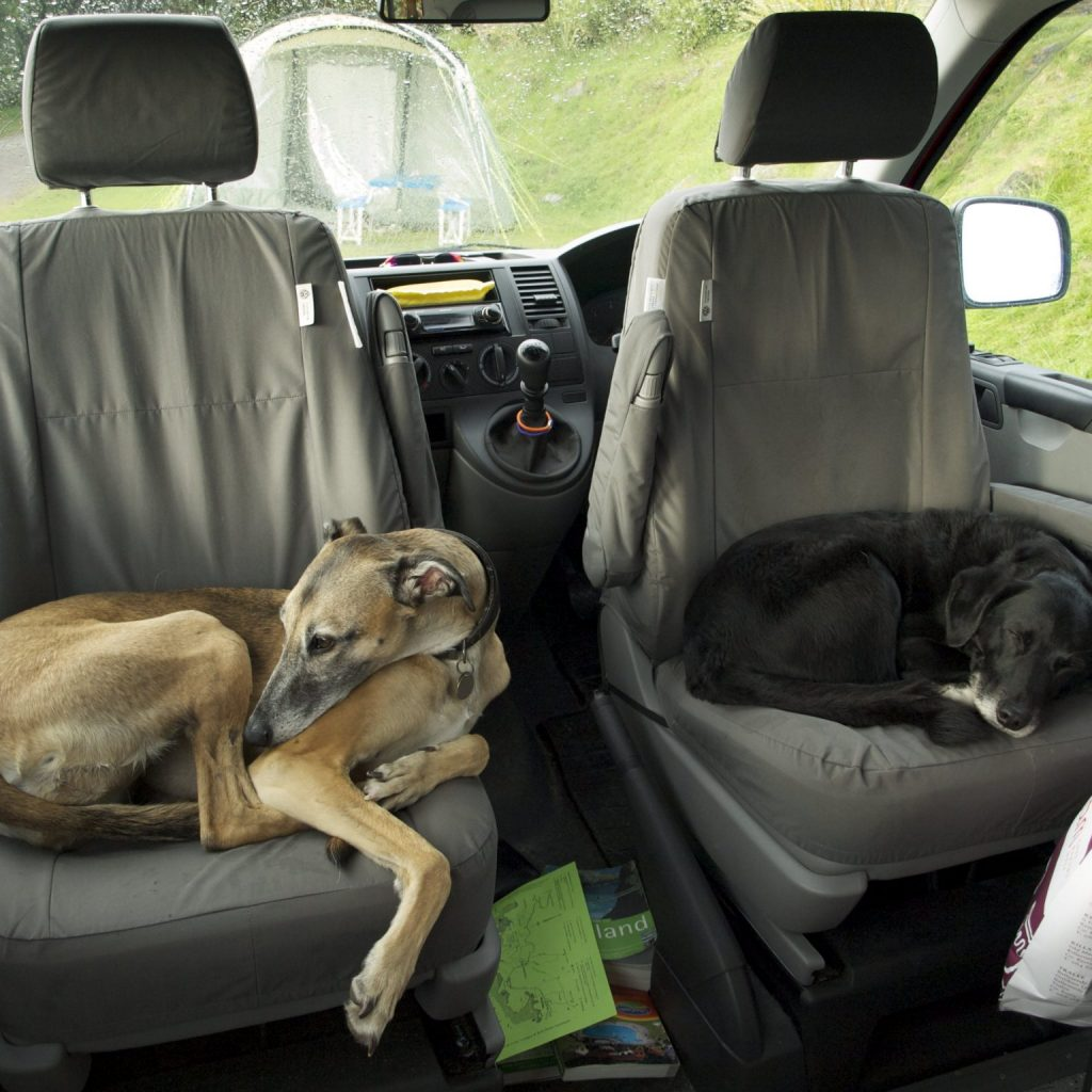 dogs on seats in campervan