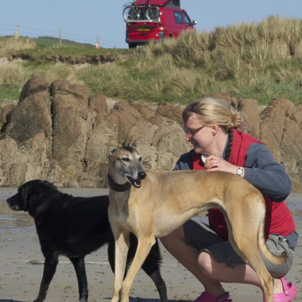 dogs on beach with owner