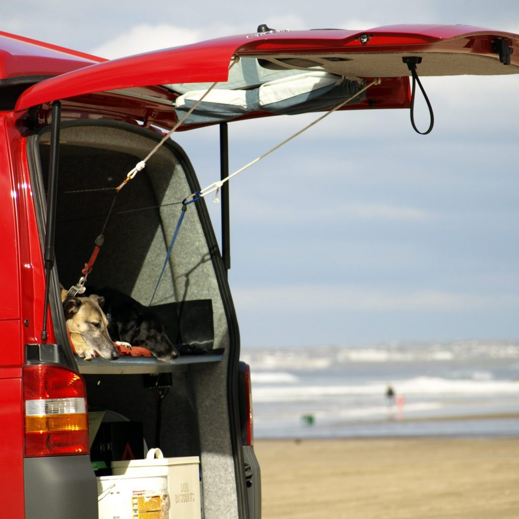 dogs in red campervan
