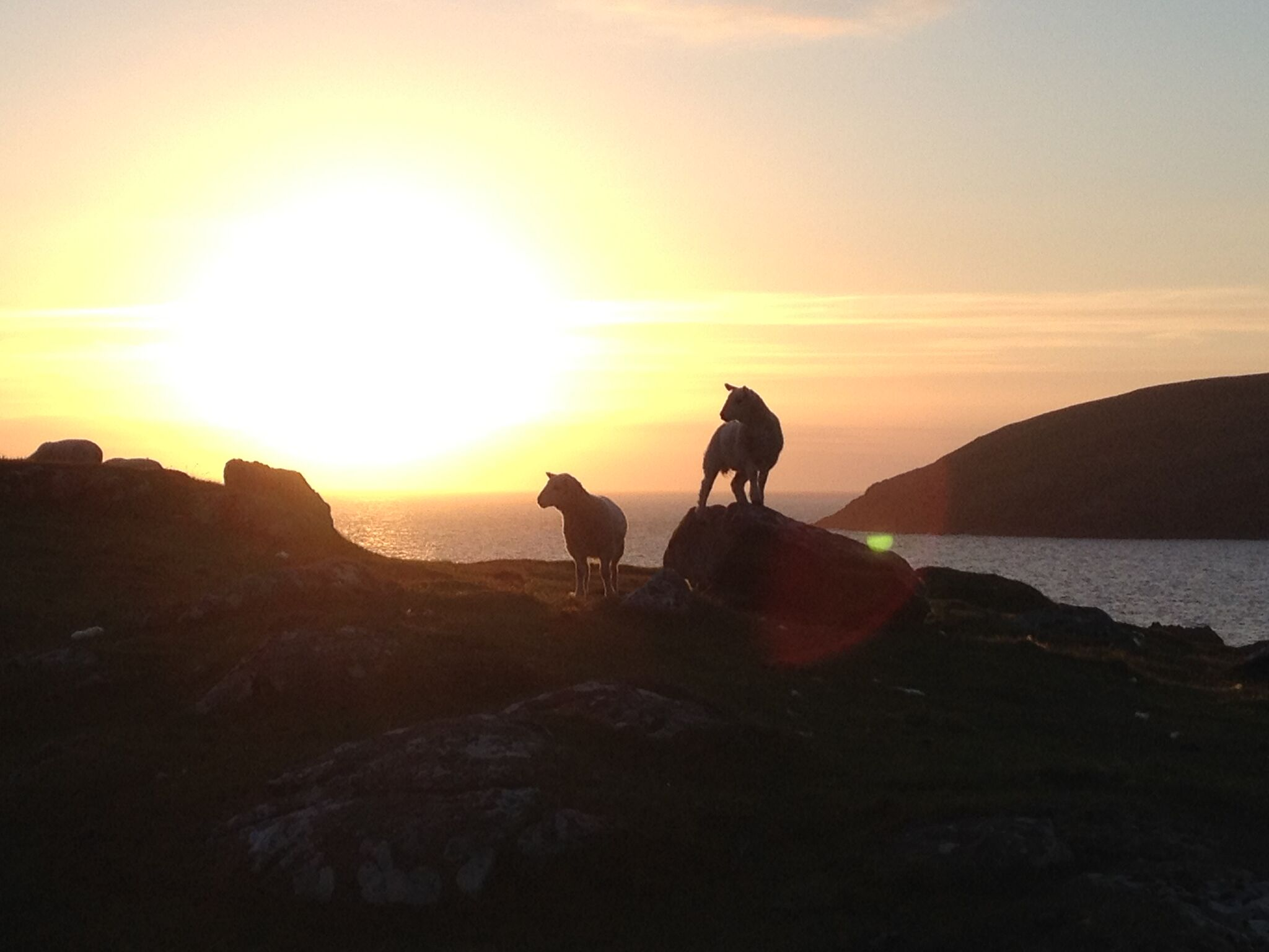 sunset lambs Clachtoll campsite